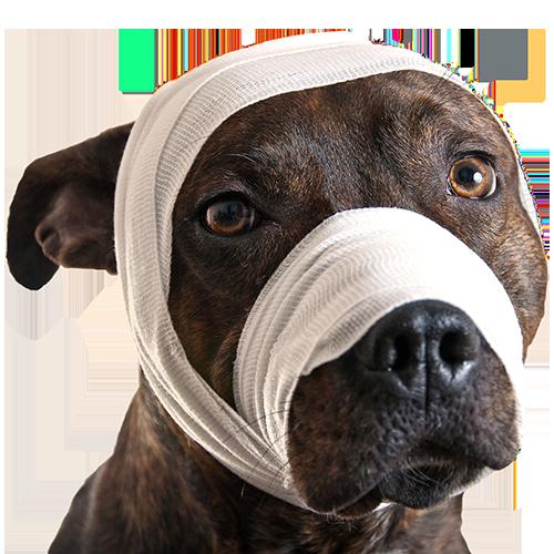 Dog-With-Bandage -